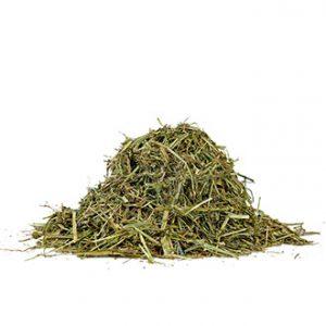 Buy RAY GRASS